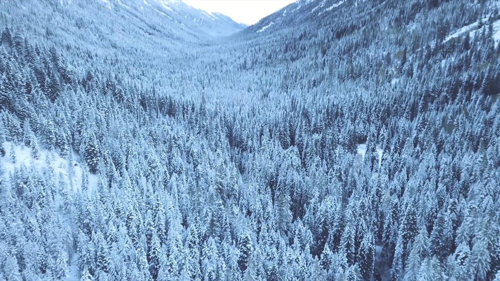 Mountains covered with trees and snow