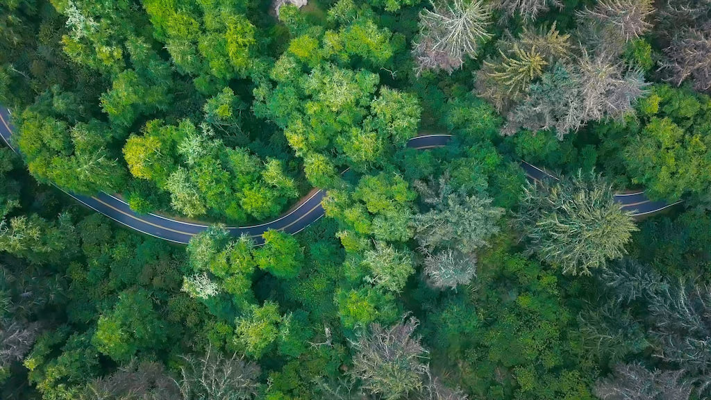 Video of a car driving on the winding forest road